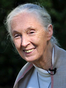 Jane Goodall by Nick Stepowyj